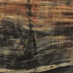 Petrified Wood Etchings Laminate Sheet